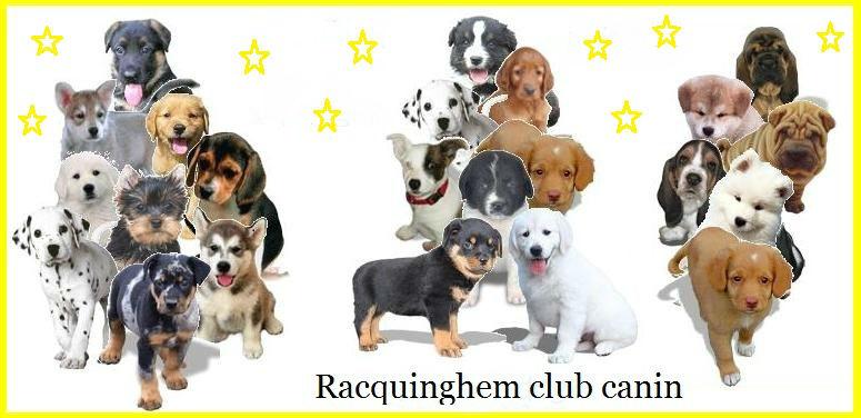 index - racquinghem-club-canin